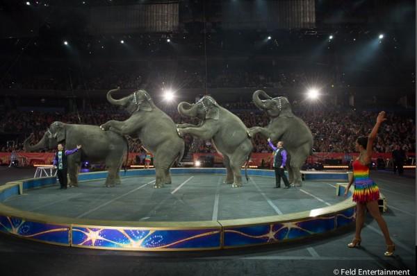 ringling olifanten