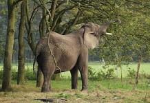 vnco olifant