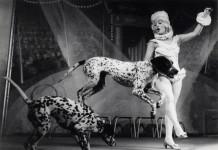 circusgeschiedenis alijn